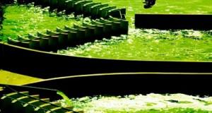 Công dụng của tảo spirulina nhật bản